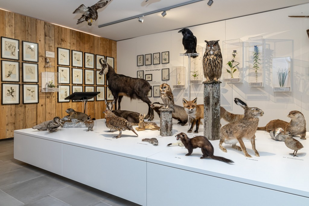 Naturkundemuseum Heimathaus Mariazell Foto: Fred Lindmoser